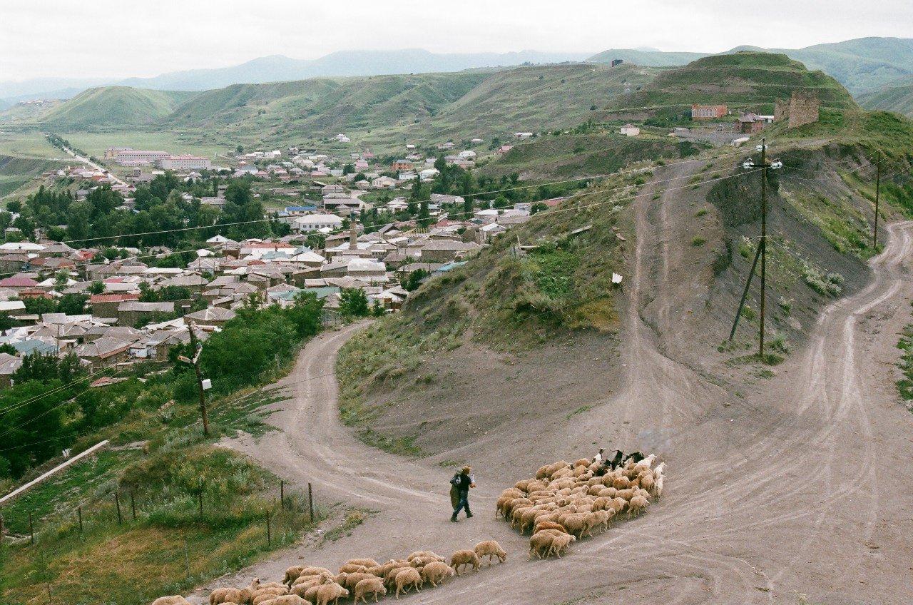 Пастух и стадо овец в Кумухе